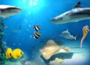 Mit der Vielfalt der Meere